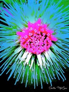 Pink Burst_Fotor